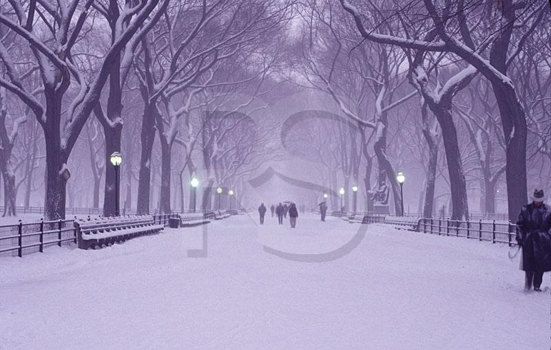 Central Park Mall In Snowstorm